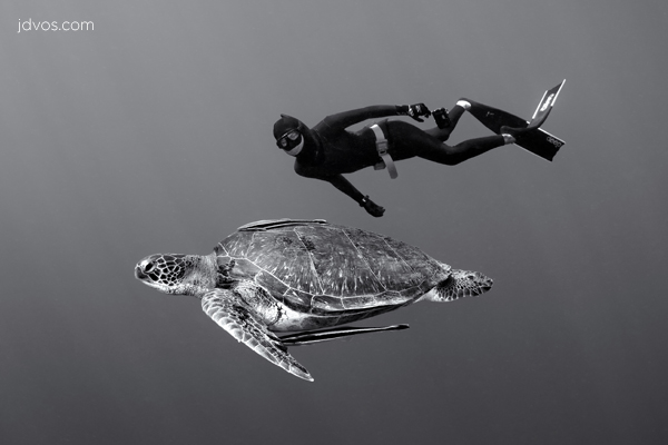Freediver And Green Turtle