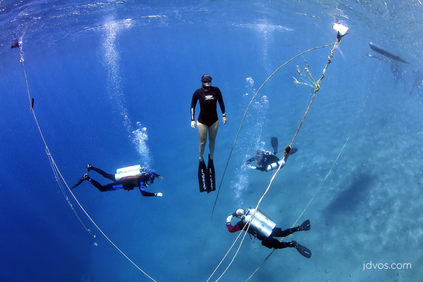 Freediver with Tek divers