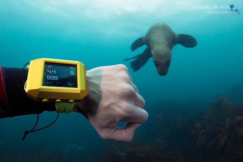 A Curious Cape Fur Seal Inspects The Linde Werdelin REEF Mounted Here On The Double Date Carbon Green.